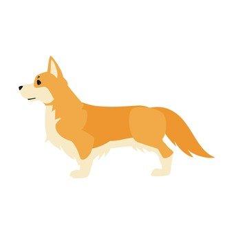 Dog - Welsh Corgi