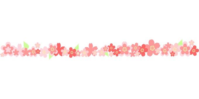 Sakura's dividing line