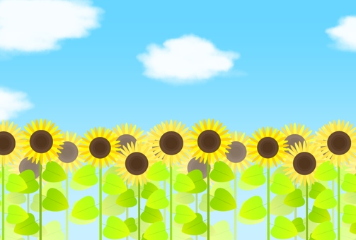Sunflower field and summer sky