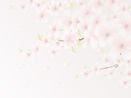 Cherry background 6