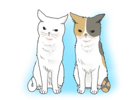 오징어 귀 고양이 2