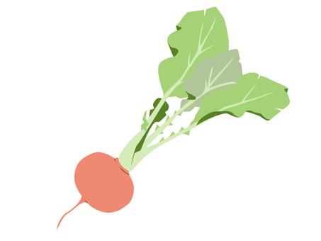 Vegetable 13 Radish (20 days radish)