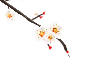 Plum branch 3