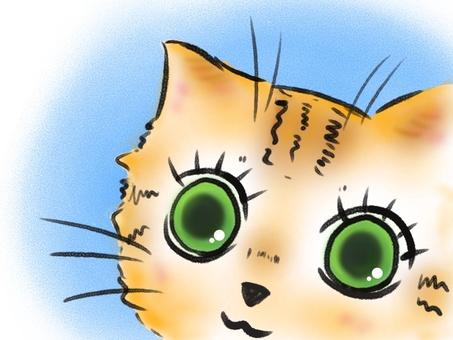 눈동자 차 호랑이 고양이