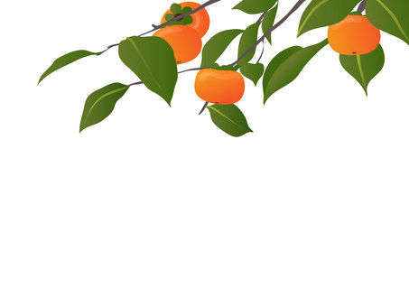 Persimmon branch frame