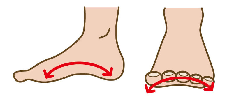 Arch of foot lengthwise and crosswise