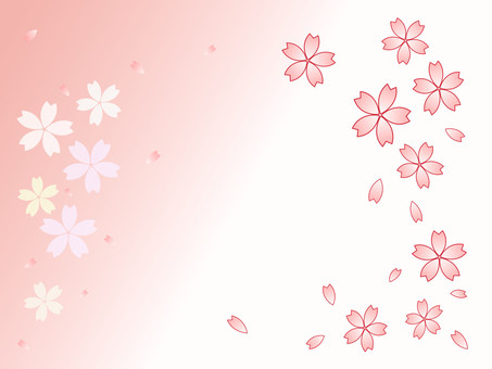 Cherry petal pink and white background