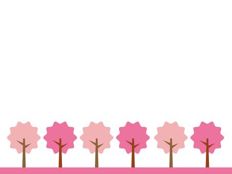 Cherry tree walking road