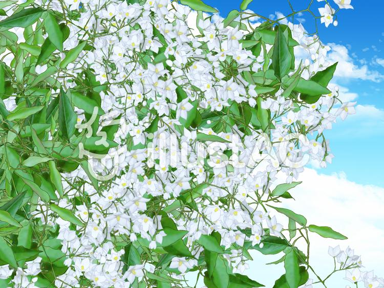白い花の背景のイラスト