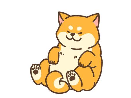 Relax Shiba