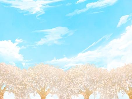 벚꽃 햇살