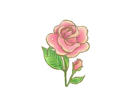 玫瑰花朵(粉紅色水彩)