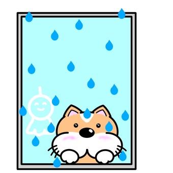 Rain and dog