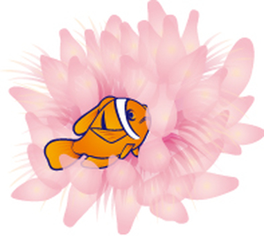 Anemone fish and sea anemones