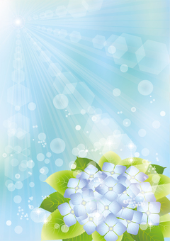 Sun & beautiful hydrangea 4