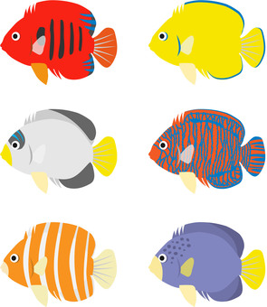 Saltwater fish angel several species