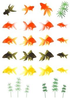 Goldfish -009