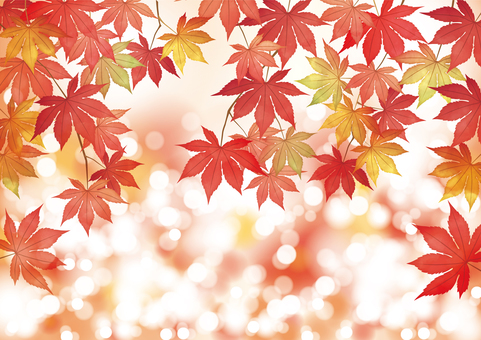 Autumn leaves, maple, round blurred background (from below)