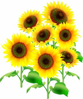 Illustration of sunflower Oil painting style