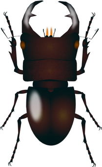Stag beetles (Okuwagata)