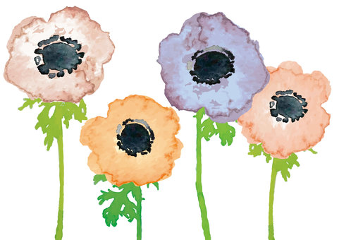 """Watercolor"" Anemone_Nuance"