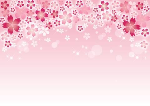 Sakura _ Pink background