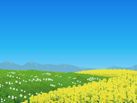 Nanohana and Clover's blue sky Hara Picture Landscape 01
