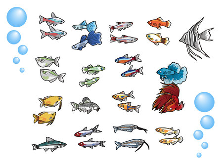 16 species of tropical fish