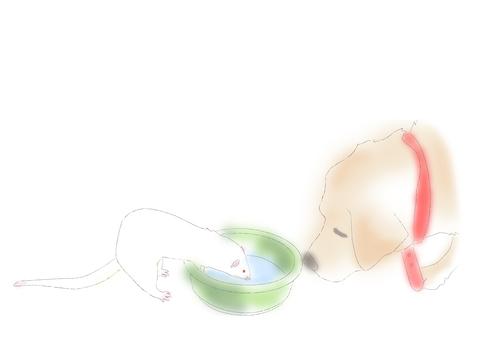 Ferret and Labrador