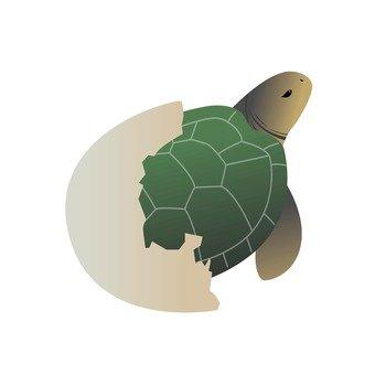 Turtle 14
