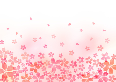 Cherry blossoms _ _ pastel _ pink background 1836