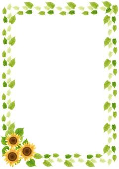 Sunflower 69