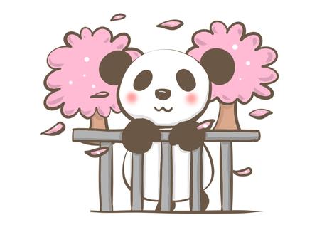 Panda cherry blossoms along the river