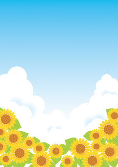 Sunflower and blue sky background 01