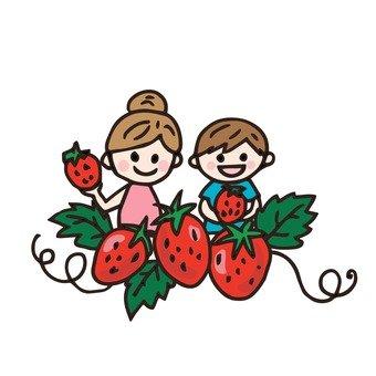 採摘草莓。