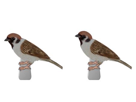 """Bird """"Sparrow"""" (1687)"""