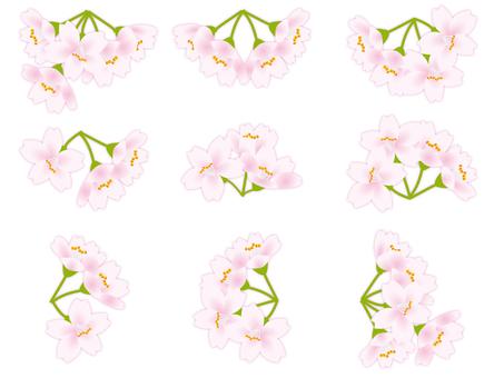 櫻花櫻花櫻花很多