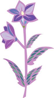 Campanulaceae 1