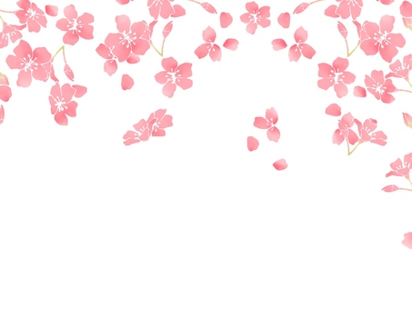 Cherry blossoms (wallpaper) 4
