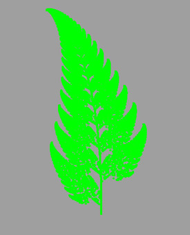 양치류의 잎