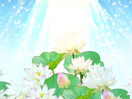 閃閃發光的蓮花背景