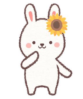 Sunflower rabbit
