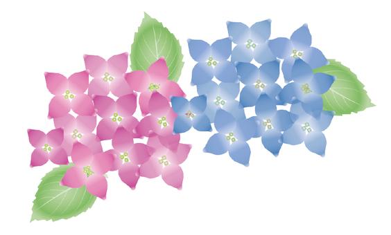 Hydrangea's flower (watercolor style)