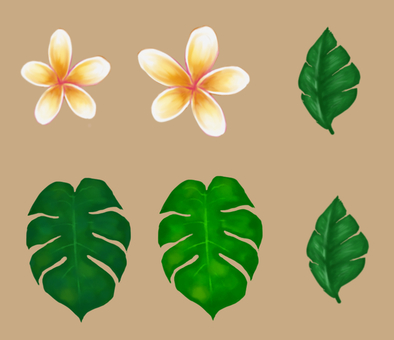 Plumeria and Monstera and leaves