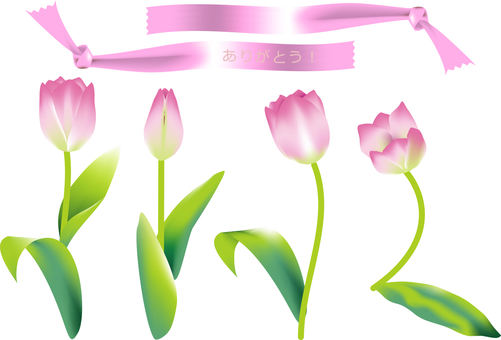 Pink tulips and ribbons