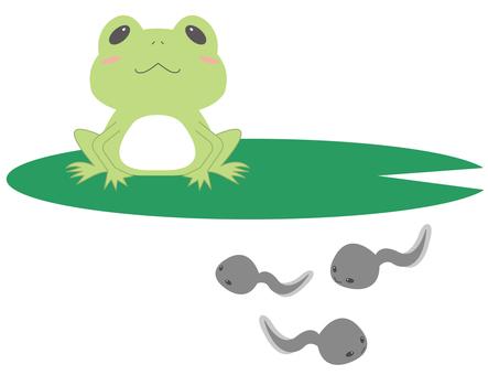 【Animals】 Frog