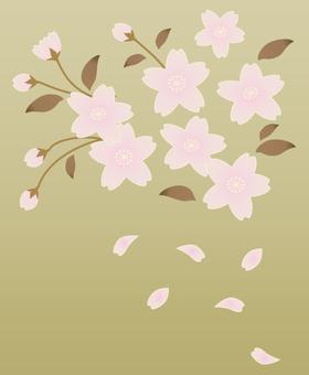 Cherry Blossoms)
