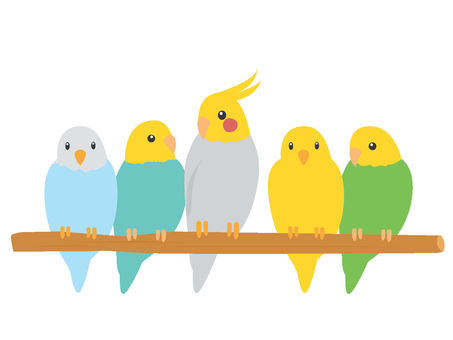 Five parrots of perch