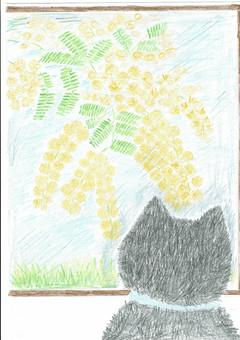 Cat looking at mimosa