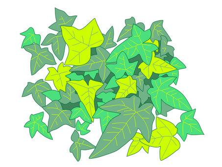 Ivy, ivy
